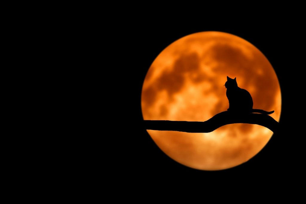 cat for halloween photography ideas